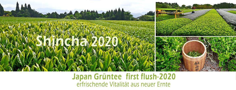 banner Sincha 2020